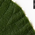 HerbariumCode: CRÛG - Herbarium: Crûg Farm Plants, Wales (UK) - Number plant: 1996-BSWJ3563-Taiwan - Number picture: 12