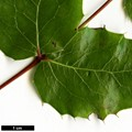 HerbariumCode: OCOLIN - Herbarium: Olivier Colin - Number plant: 5051 - Number picture: 04