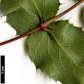 HerbariumCode: OCOLIN - Herbarium: Olivier Colin - Number plant: 5051 - Number picture: 06