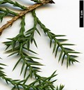 HerbariumCode: DIV - Herbarium: Diverse Sources - Number plant: 0000 - Number picture: 05
