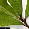HerbariumCode: POUSSE - Herbarium: Jacky Pousse (F) - Number plant: 0000-Iturr - Number picture: 02