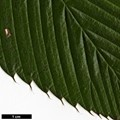 HerbariumCode: BARCLA - Herbarium: Barry Clarke - Number plant: 2014001A-PaulBartlet-Myamar - Number picture: 07