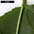 HerbariumCode: DIV - Herbarium: Diverse Sources - Number plant: 0000 - Number picture: 03