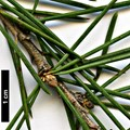 HerbariumCode: DIV - Herbarium: Diverse Sources - Number plant: 0000 - Number picture: 04